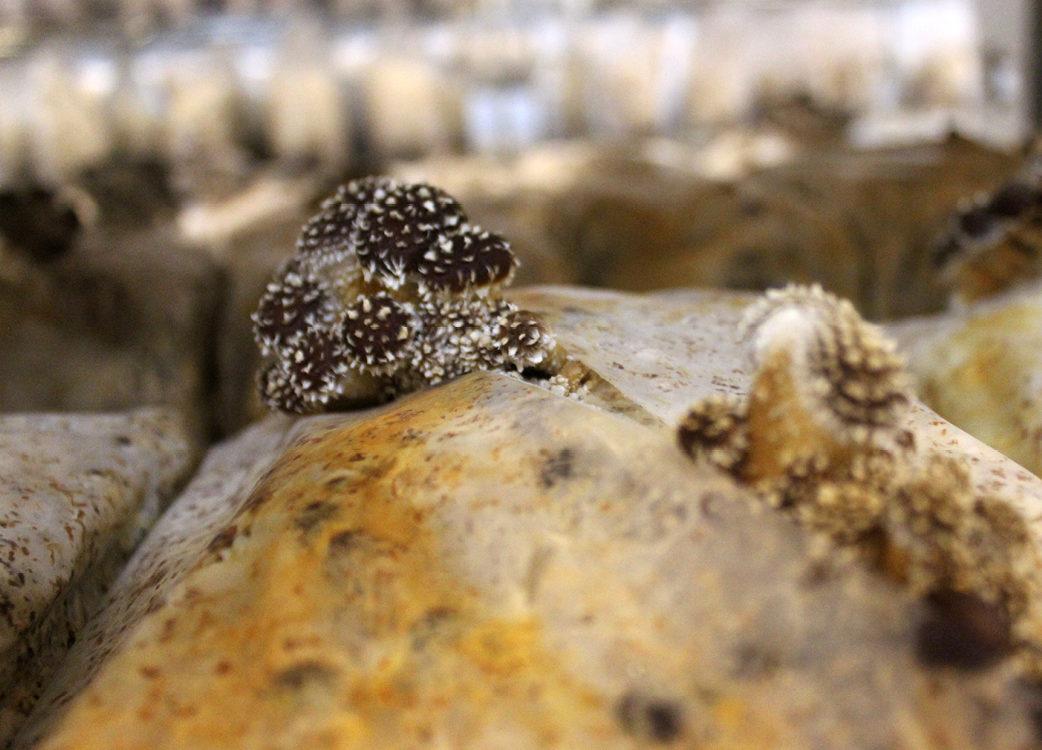 Small mushroom covered in fuzz