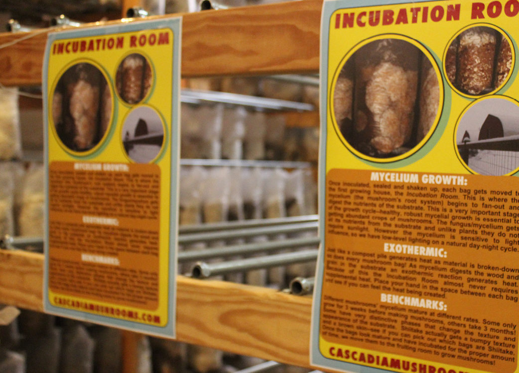 Some printed guides inside the incubation room.