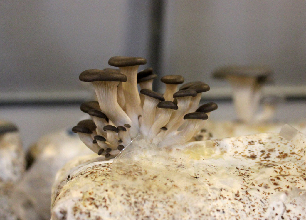 Thin mushrooms growing form a material