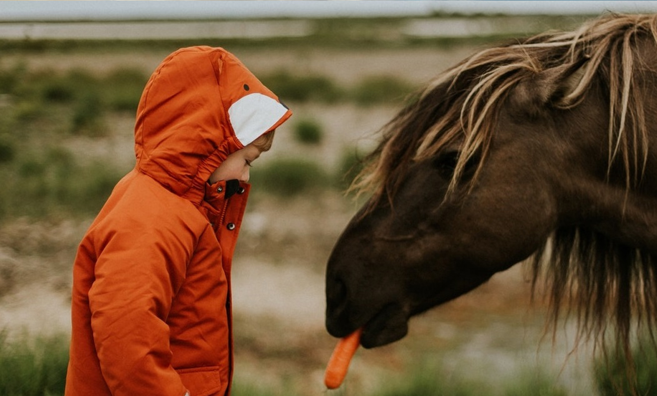 WECU presents a check for $3,581.48 to Animals as Natural Therapy.