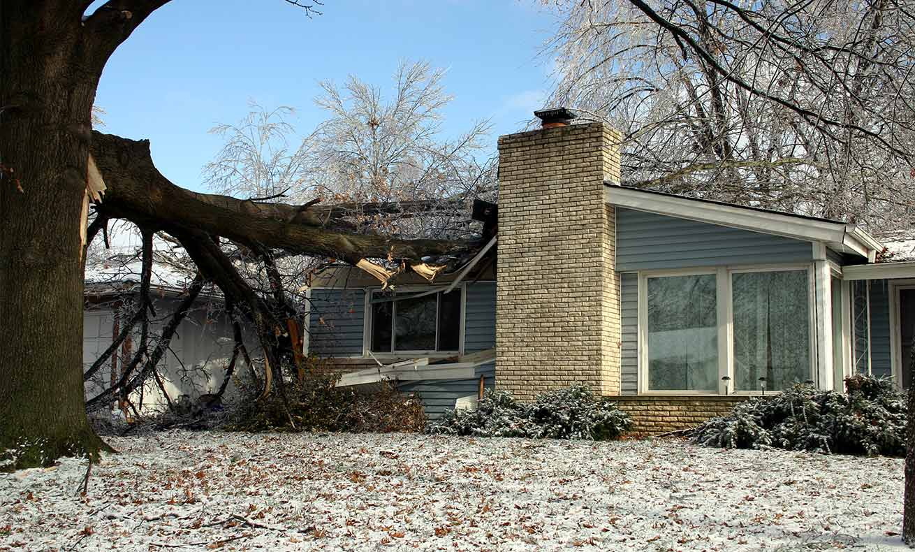 A large oak tree that has fallen on a house.